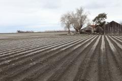 AP-beet biofuel-salty lands