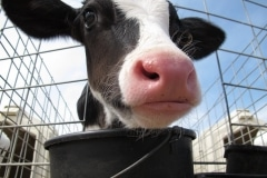 Dairy Overhaul (1)