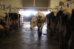 Dairy Overhaul (3)