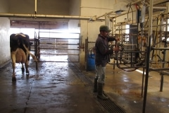 Dairy Overhaul (7)