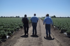 Latino Strawberry Growers