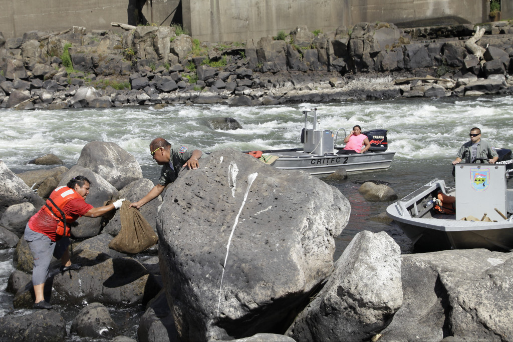 In this Friday, June 12, 2015 photo, a Native American fisherman passes a burlap sack full of lampreys, eel-like fish, at the rocks at Willamette Falls, a 40-foot waterfall south of Portland, Oregon. Northwest Native American tribes began harvesting the lampreys this week.(AP/Gosia Wozniacka)